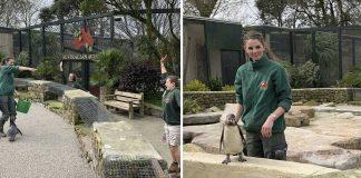 Trabajadoras de un parque de la vida silvestre se autoaislaron para cuidar animales