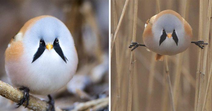 adorables aves redondas que se abren de piernas en las ramas
