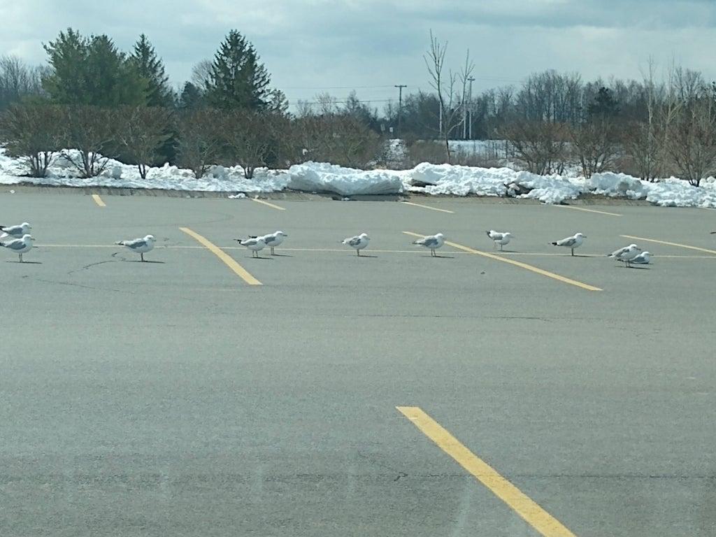 Aves separadas sen un parqueadero