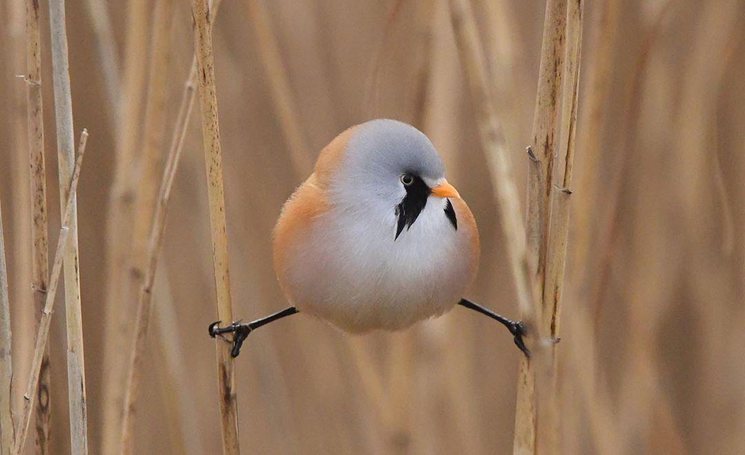 aves que tiene un curiosa forma de pararse en las ramas