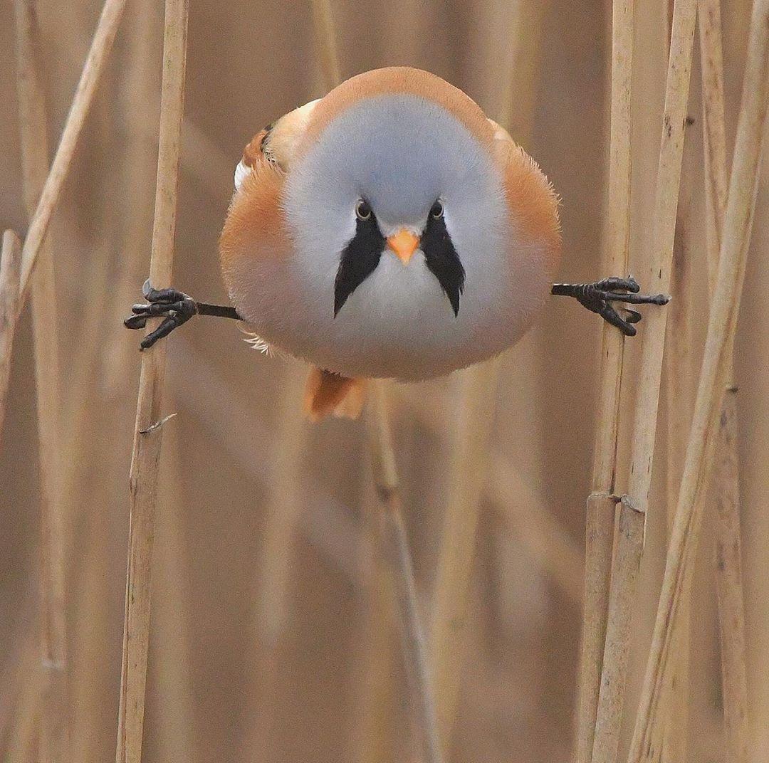 """Estas adorables ave se pueden """"abrir de piernas"""" perfectamente"""