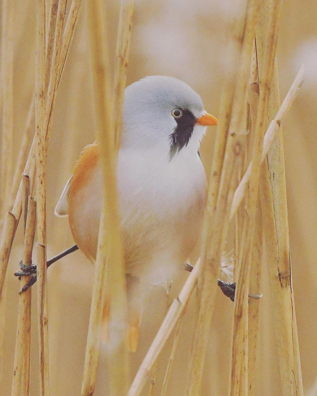 lindas aves que abren sus patitas en las ramas