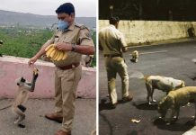 Cuerpo cívico alimenta a animales hambrientos en la calle en la India