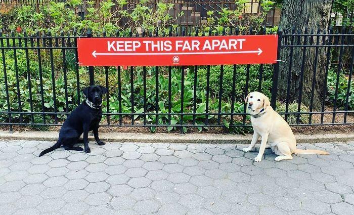 distancia que toman entre dos perritos debido a la pandemia