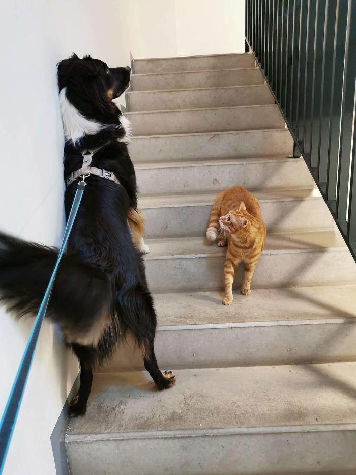 distanciamiento social animal