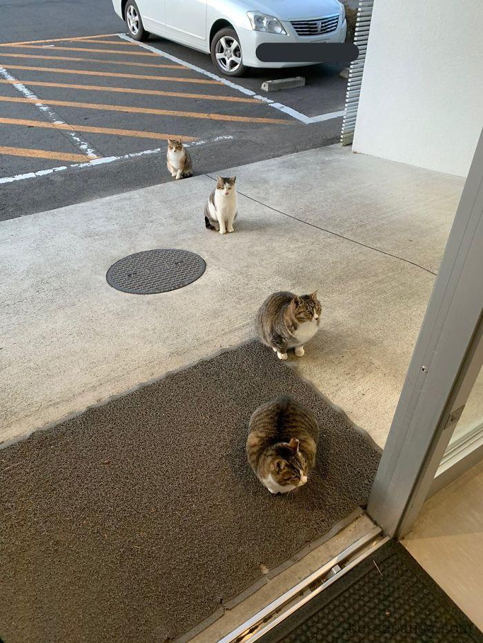 Ejemplo de distancia social que dan los animales