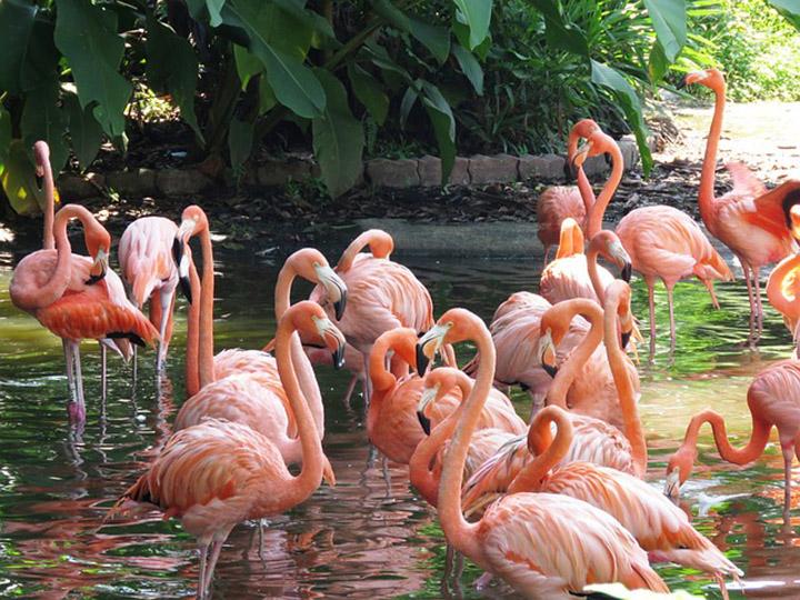 Aves crean lazos sociales
