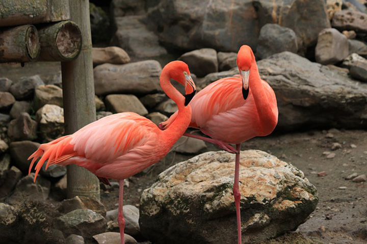 Aves formando amistad