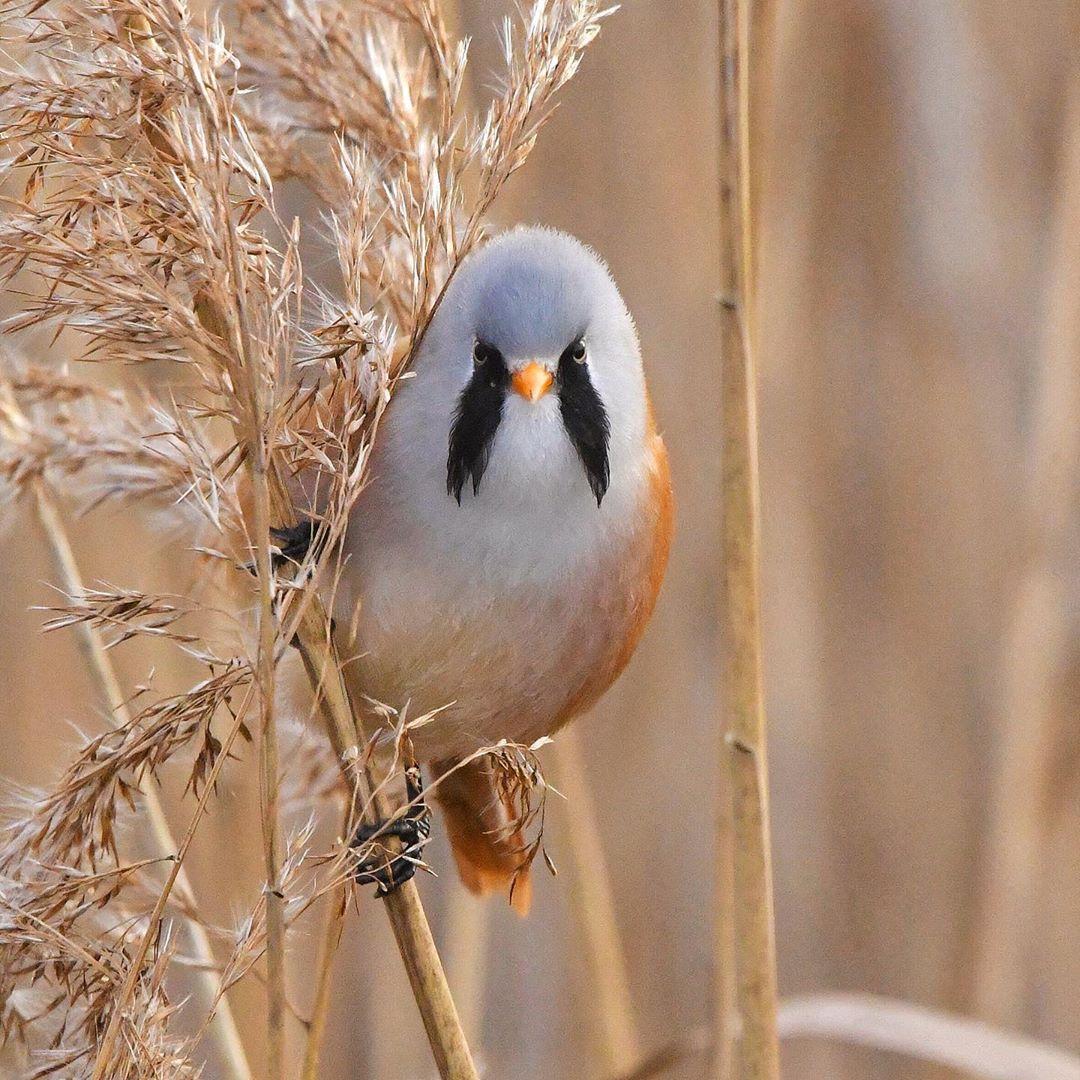 adorables aves redondas