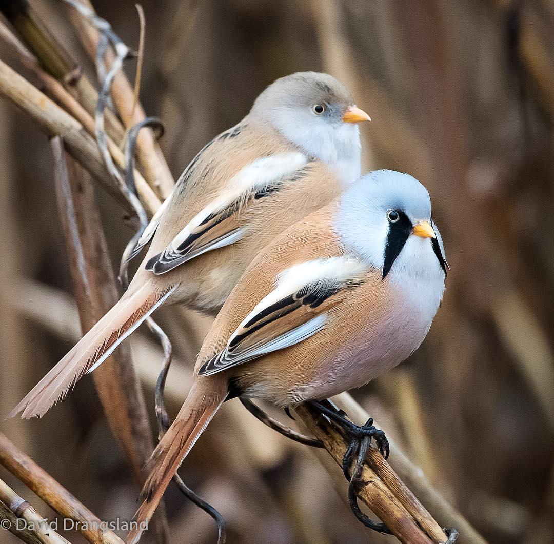 """Estas aves se pueden """"abrir de piernas"""" perfectamente"""