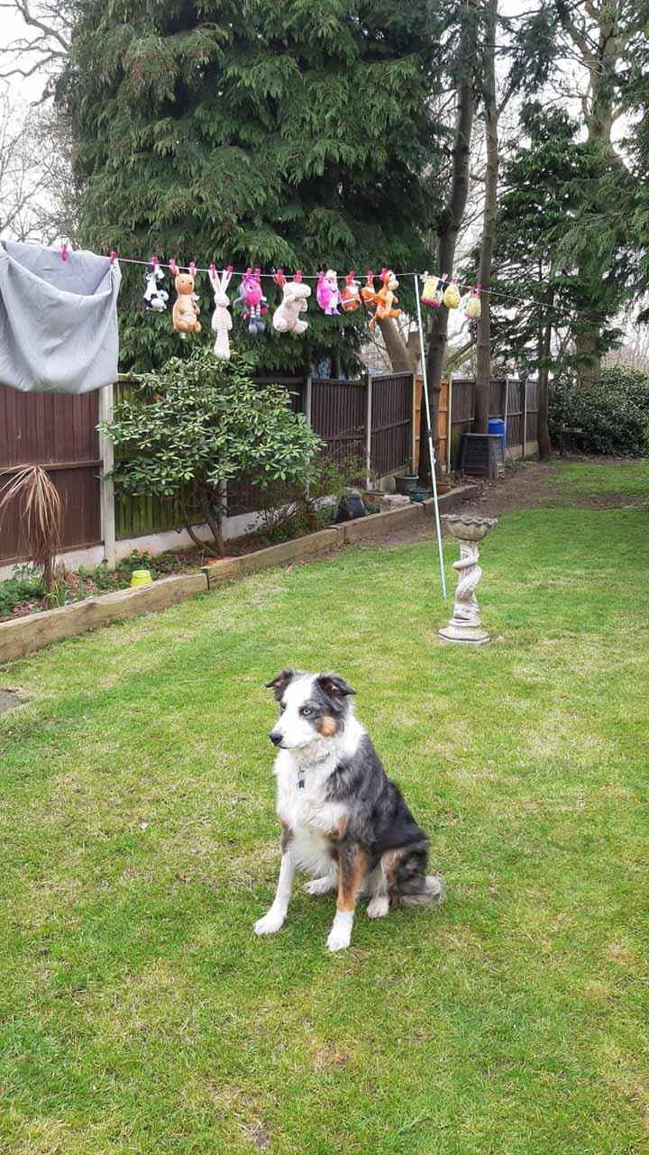 perro cuida sus juguetes mientras se secan