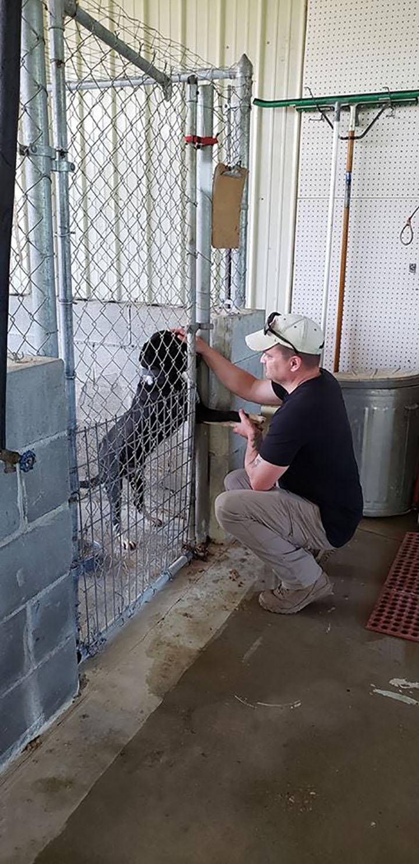 perro de refugio busca amor