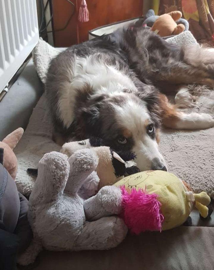 perro junto a sus juguetes favoritos