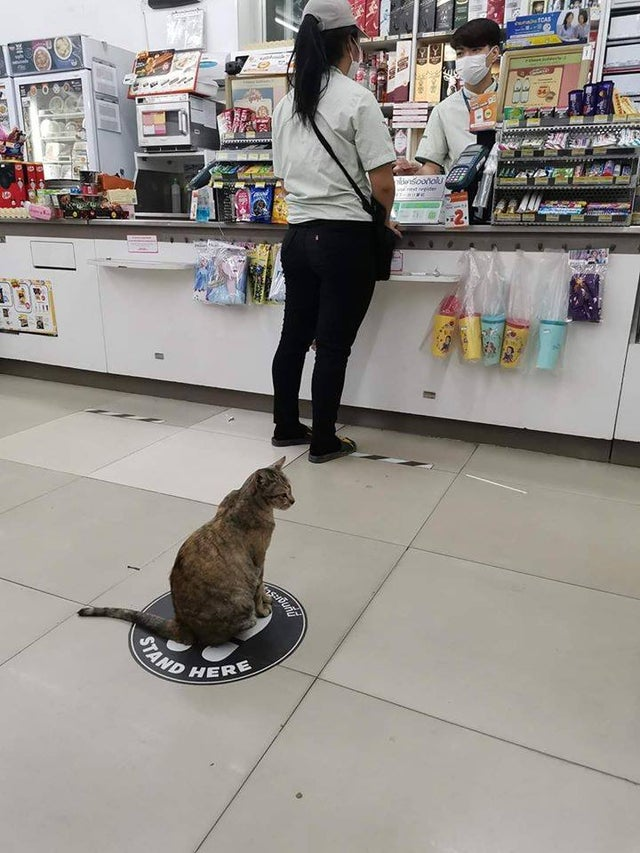 Gato guarda su distancia en un almacén