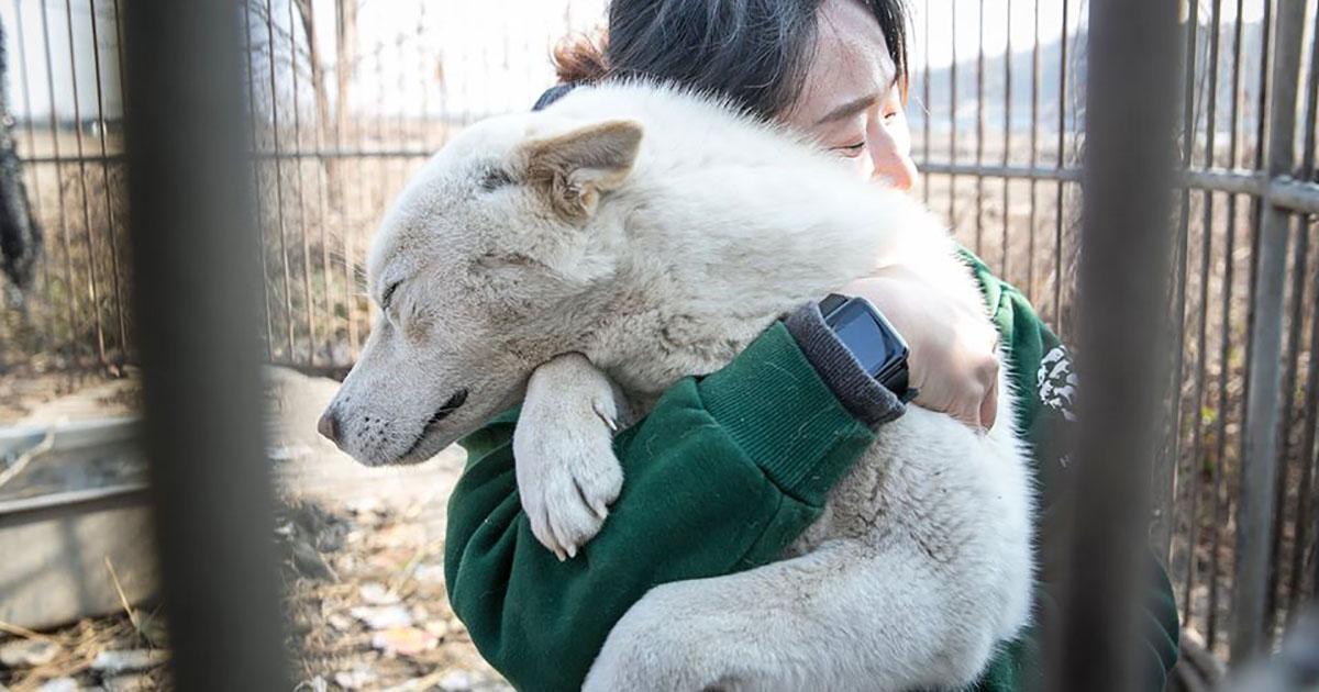 70 perros rescatados de una granja