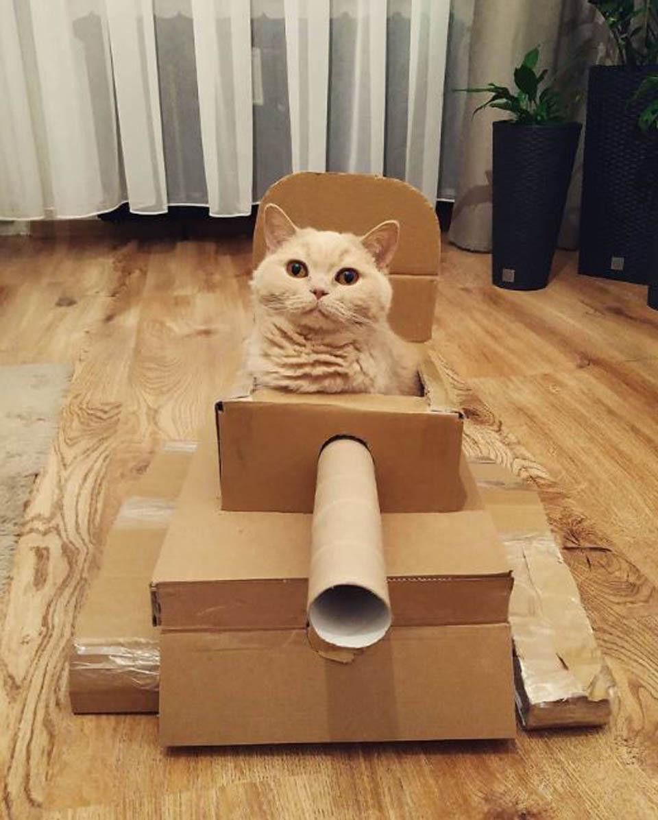 Adorable gatito en caja de cartón