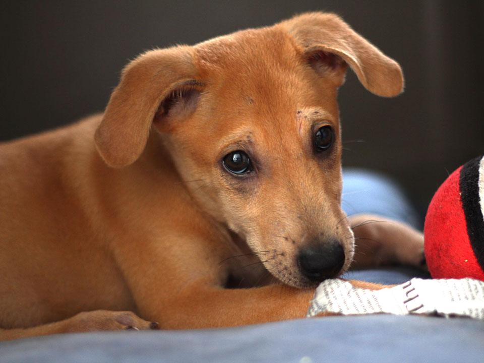 Adorable perrito buscaba una familia