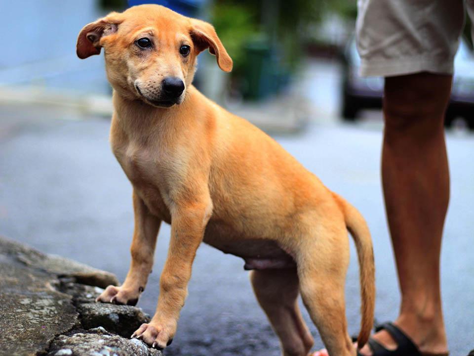 Adorable perrito necesitaba amor