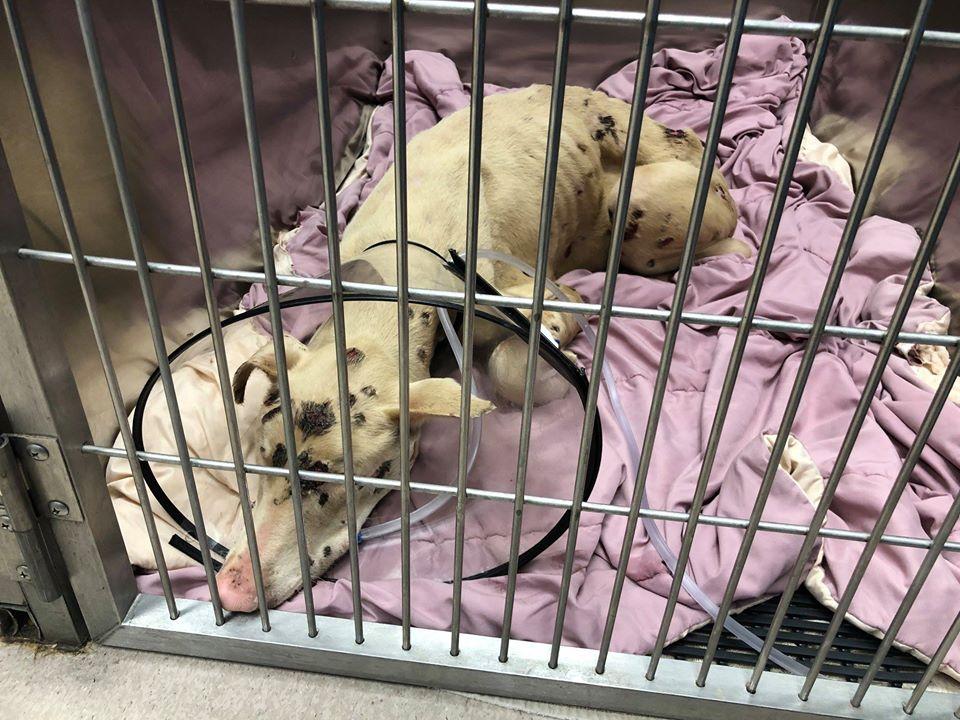 Cachorro en el refugio