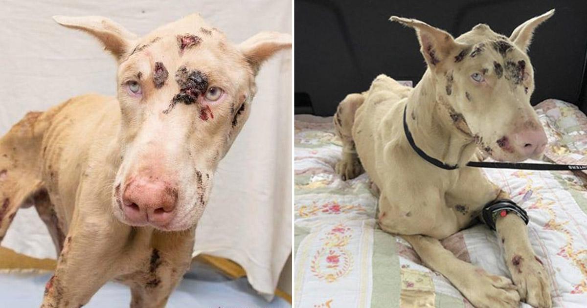 Cachorro hambriento comió piedras para sobrevivir