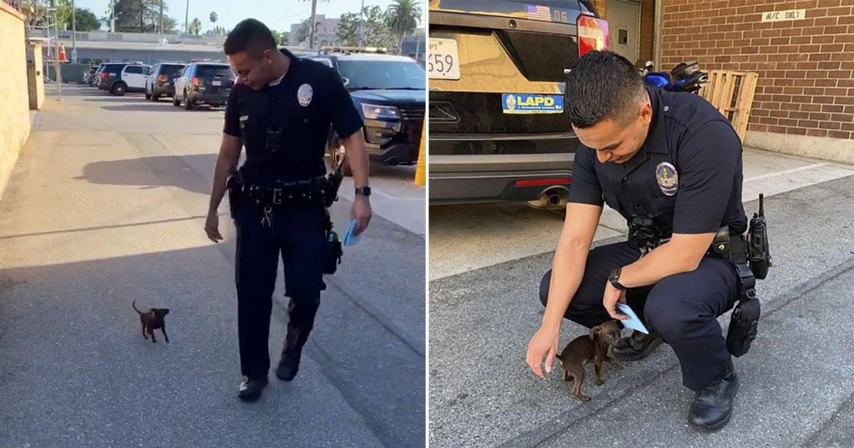 Pequeño cachorro persigue policías