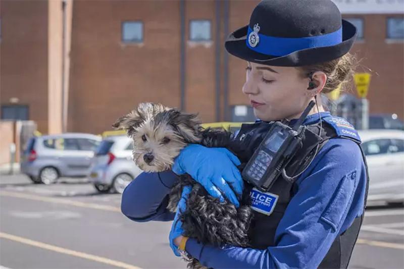 Cachorro salvado