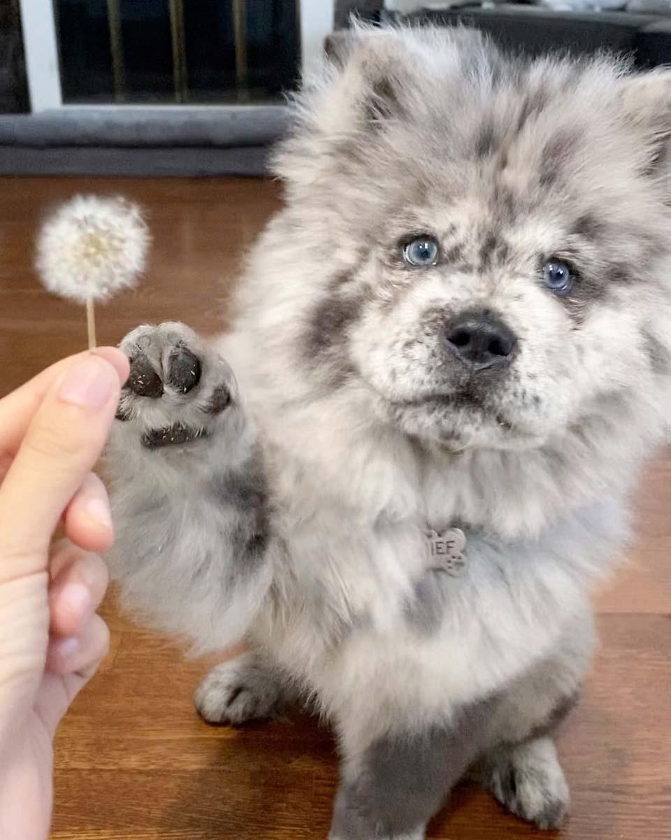 Cachorro será un perro de terapia