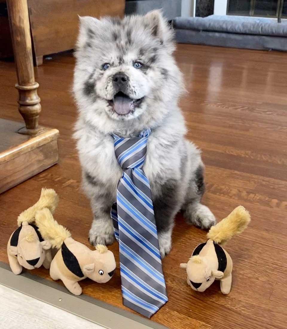 Chief es un perro adorable