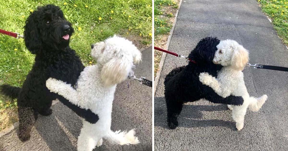 Dos perritos se reencuentran y se reconocen