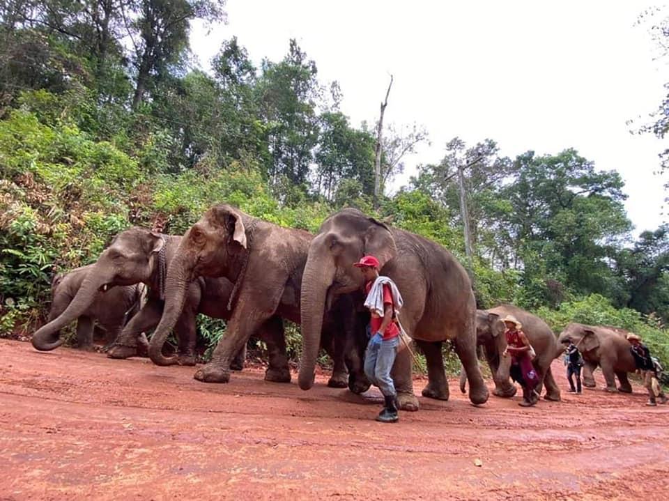 Elefantes y dueños