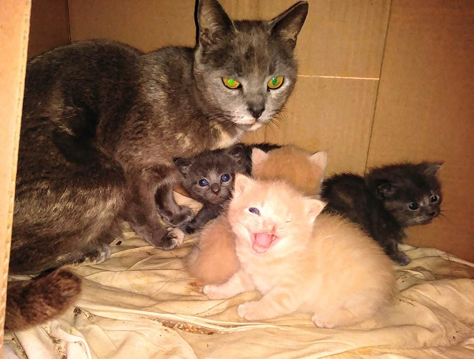 Familia de gatitos