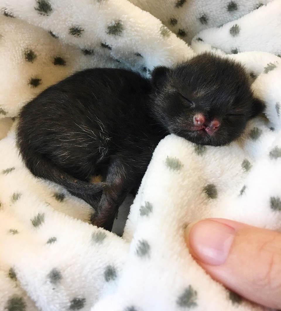 Gata bebé duerme