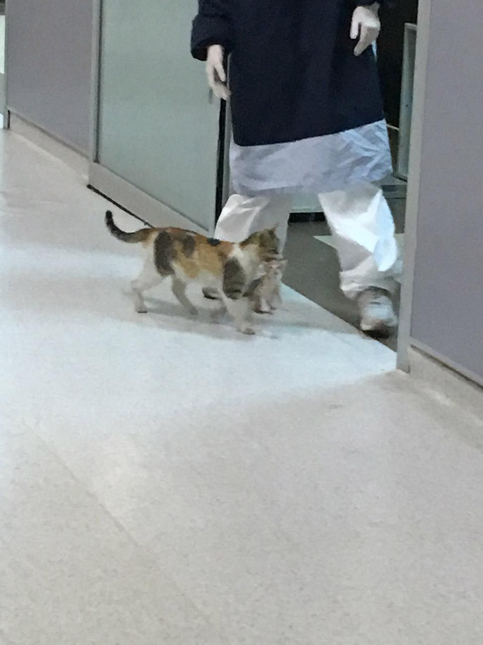 Gata llega al hospital