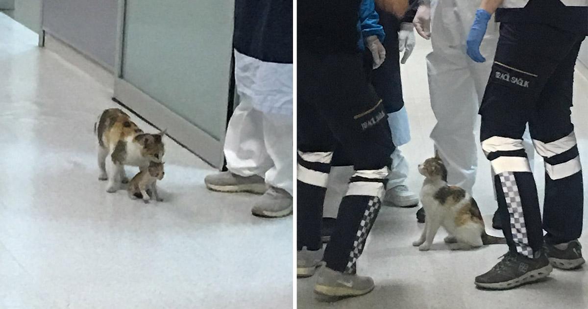 Gata lleva a su gatito al hospital