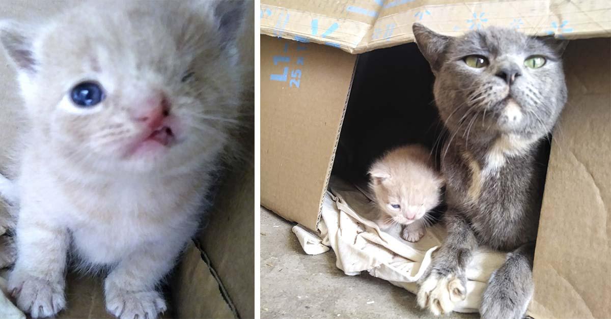 Gata muestra a sus gatitos uno tiene una condicion especial