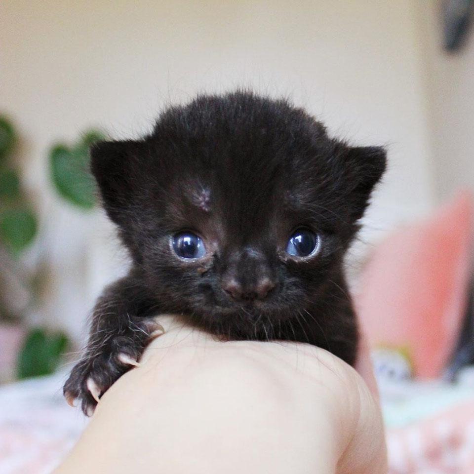 Gatita negra con linda nariz