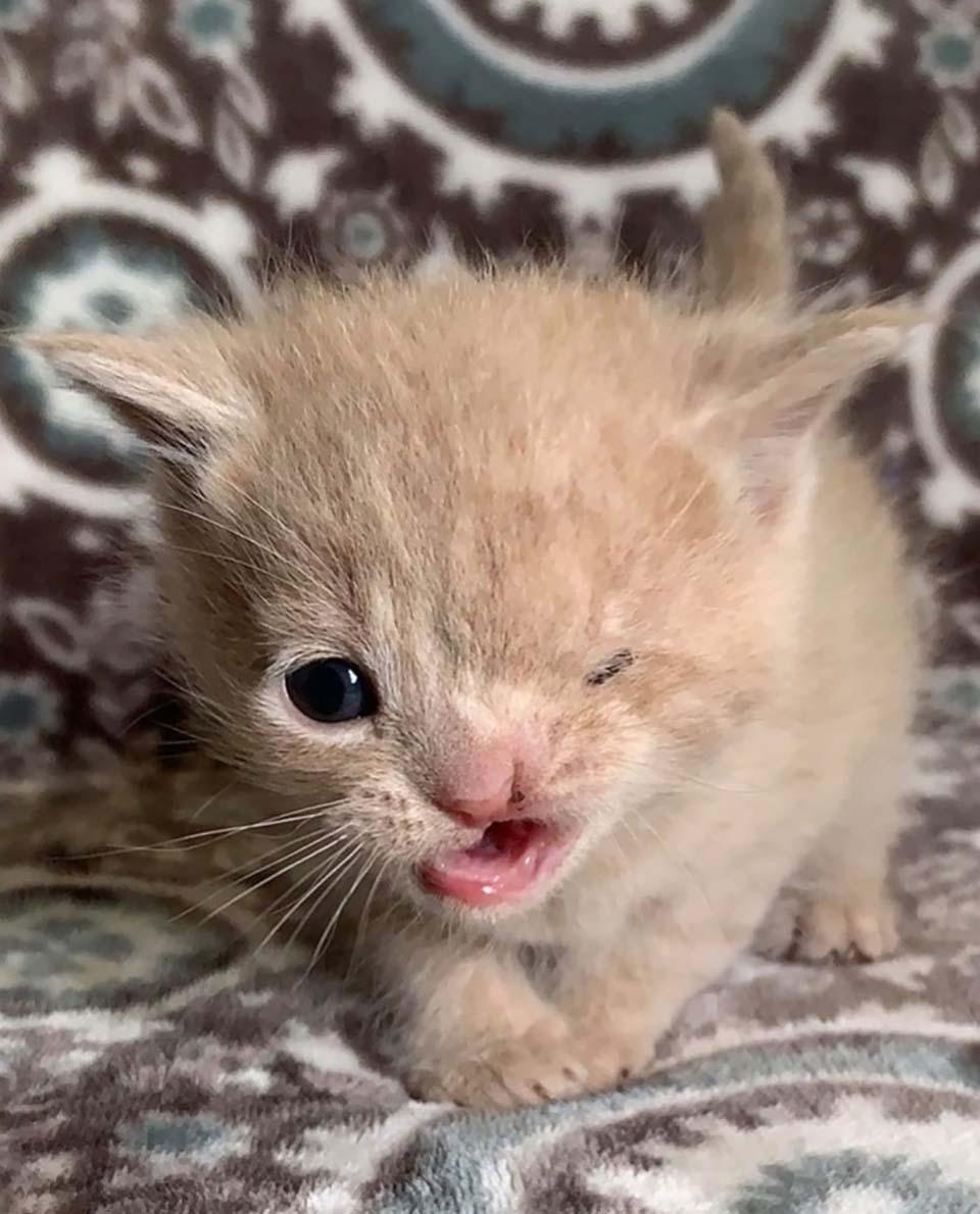 Gatito con guiño permanente