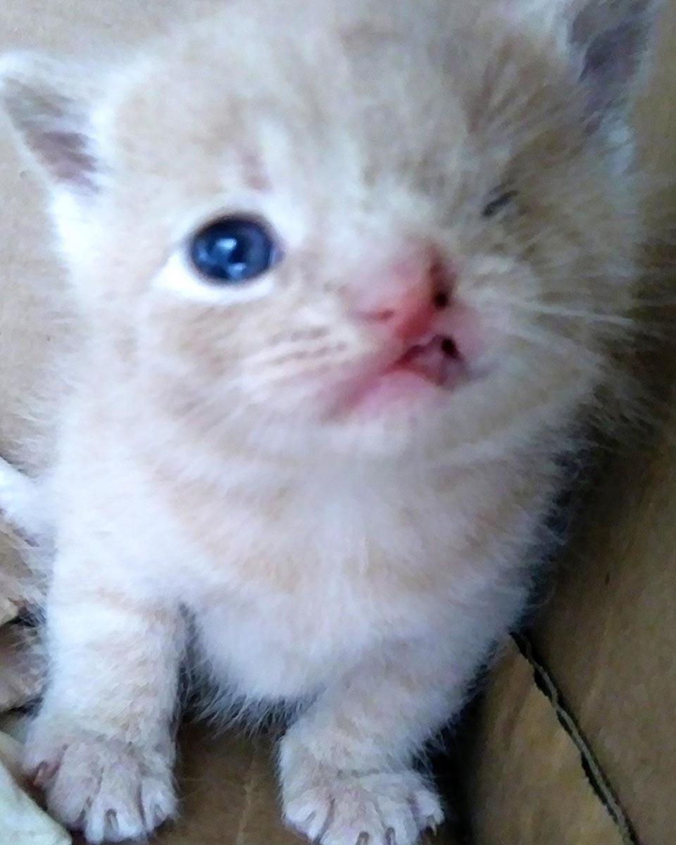 Gatito con labio leporino