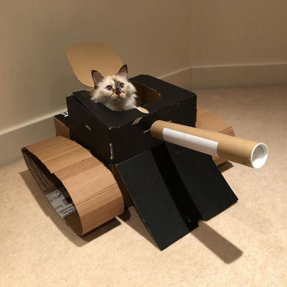 Gatito disfruta de su nueva caja de cartón