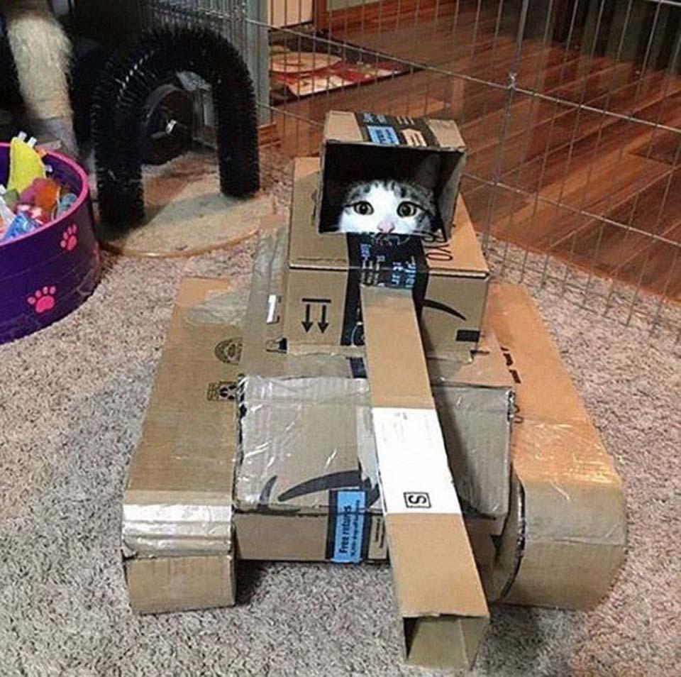 Gatito en cajas muy creativas