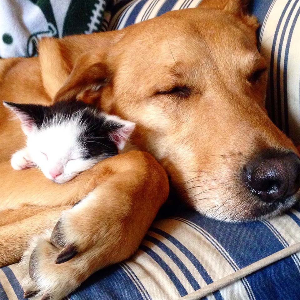 Gatito y Raylan
