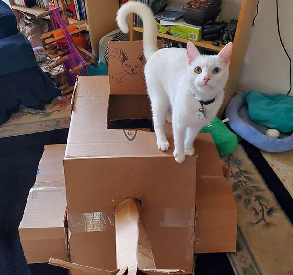 Gato blanco sobre tanque de cartón