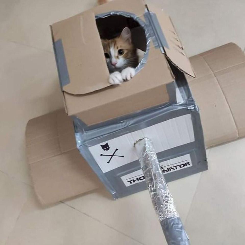 Gato en tanque de cartón