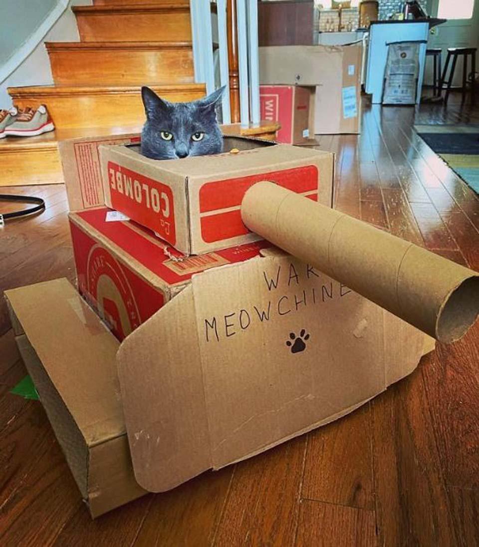 Gato gris en tanque de cartón