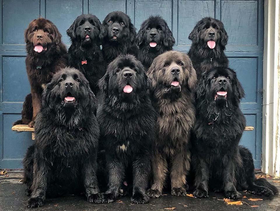Grandes perros
