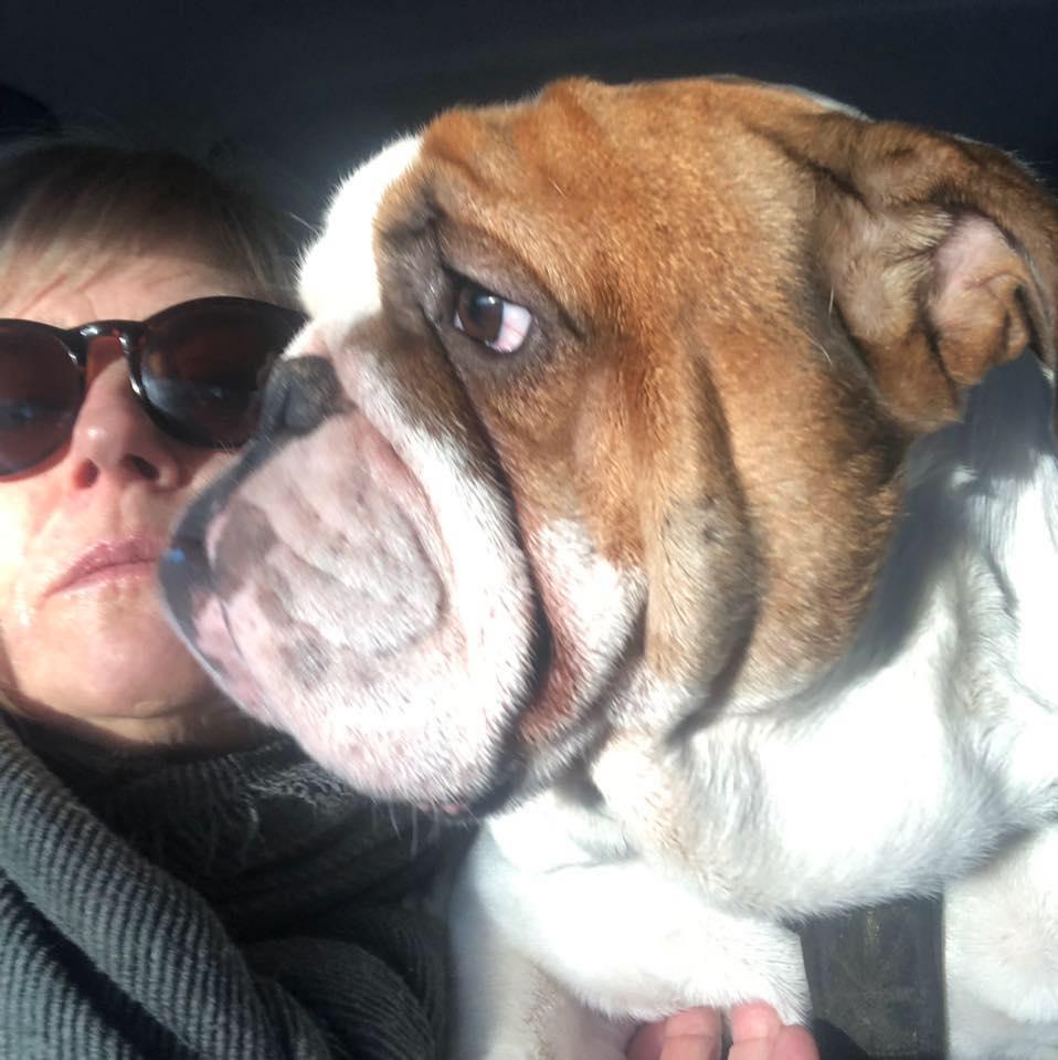 Hermoso Bulldog