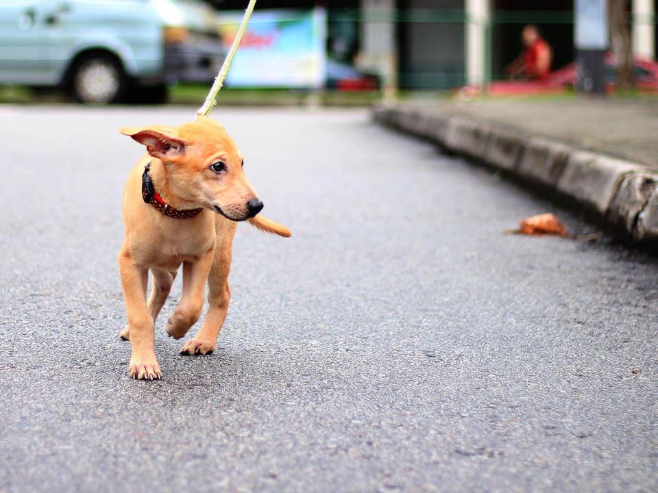 Loki paseaba en las calles