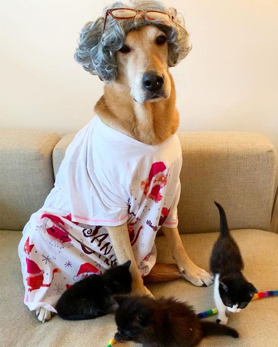 Madre cuida gatitos