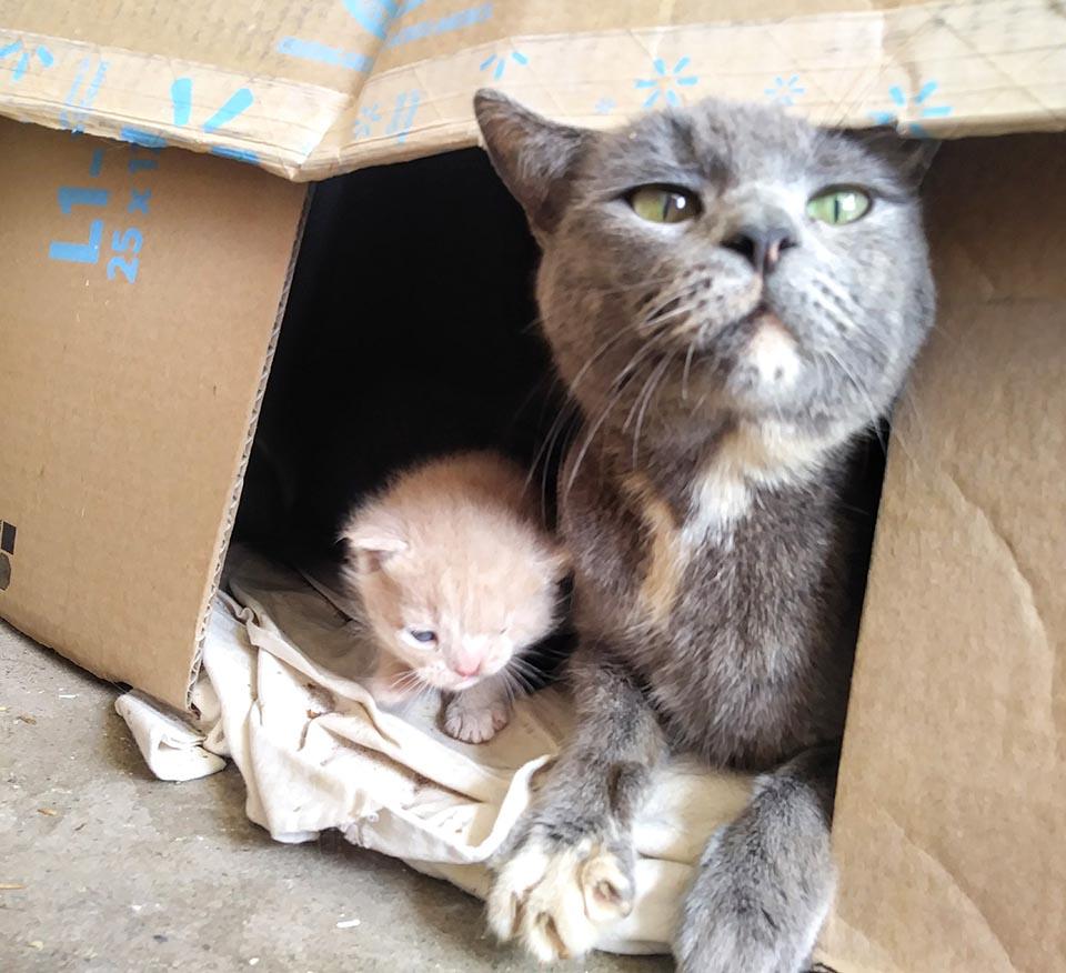 Mamá gata cuida a sus gatitos