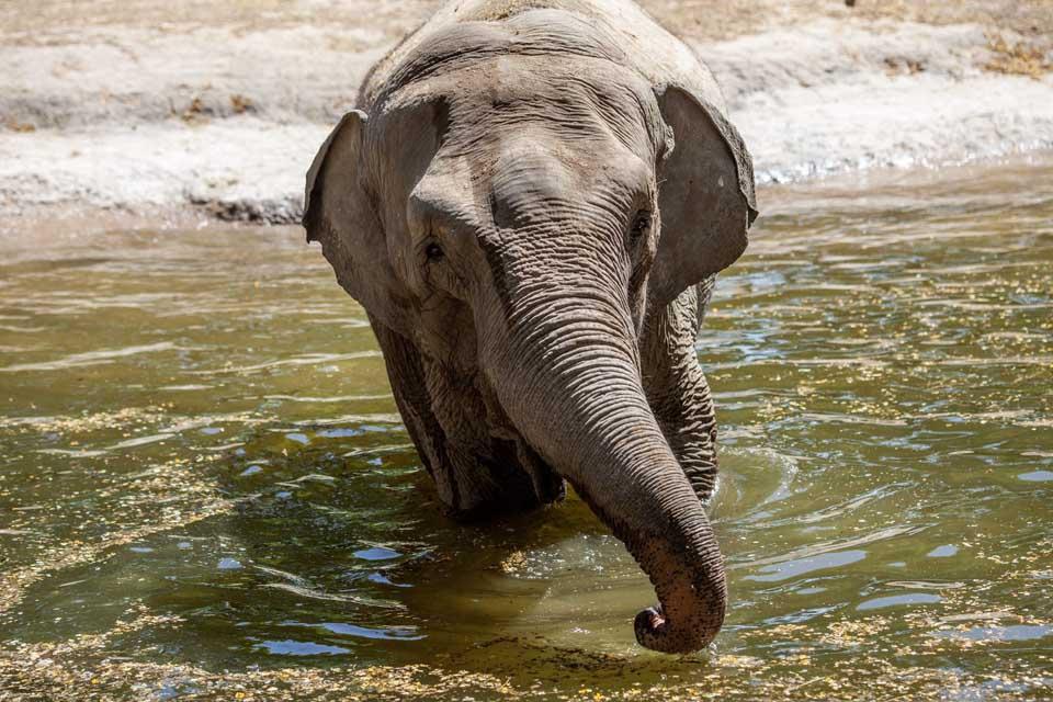 Mara disfruta del agua